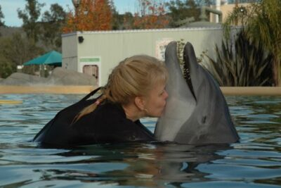 Wining, Dining, and Swimming with the Dolphins at Six Flags Discovery Kingdom