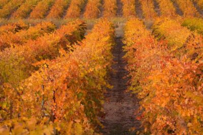 Mining, Wining, and Dining in Historic Amador County, California