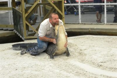 Gators and Snakes, Yikes! A Slithery & Scaly Road Trip Gem