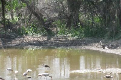 McAllen, Texas, The Artful Birdwatching Destination
